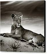 Lioness On Desert Dune Canvas Print by Johan Swanepoel