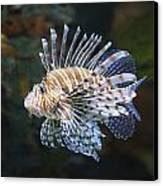 Lionfish - Gatlinburg Tn Ripleys Aquarium Canvas Print by Dave Allen