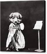 Little Fiddler Canvas Print