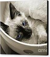 Little Miss Blue Eyes B W Canvas Print by Andee Design