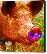 Little Miss Piggy - 2013-0108 Canvas Print by Wingsdomain Art and Photography