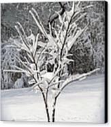 Little Snow Tree Canvas Print by Karen Adams