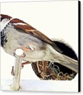 Little Sparrow Canvas Print by Karen Wiles