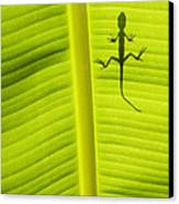 Lizard Leaf Canvas Print by Tim Gainey