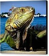 Lizard Sunbathing In Miami Canvas Print