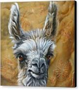 Llama Baby Canvas Print by Jurek Zamoyski