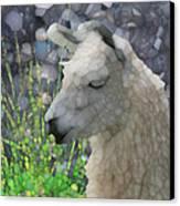 Llama Canvas Print by Jack Zulli