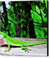 Local Lizard Canvas Print by Stephanie Grooms