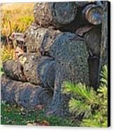 Log Pile Canvas Print by Peter Jackson