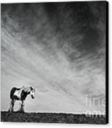 Lone Horse Canvas Print by Julian Eales