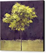 Lone Tree Willamette Valley Oregon Canvas Print by Carol Leigh