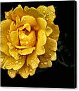 Lone Yellow Rose Canvas Print