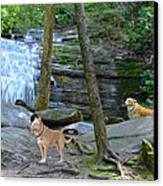 Long Creek Falls Canvas Print by Bob Jackson