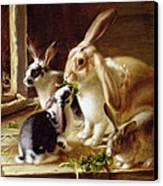 Long-eared Rabbits In A Cage Watched By A Cat Canvas Print by Horatio Henry Couldery