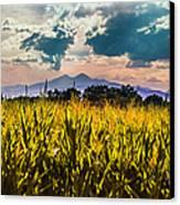Longs Peak Harvest Canvas Print by Rebecca Adams