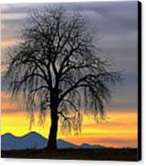 Longs Peak Sunset Canvas Print by Rebecca Adams