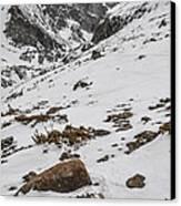 Longs Peak -  Vertical Canvas Print by Aaron Spong