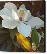 Longue Vue Magnolia Canvas Print by Katie Spicuzza