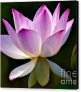 Lotus And Buds Canvas Print by Susan Candelario