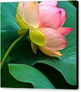 Lotus Blossom And Leaves Canvas Print by Byron Varvarigos