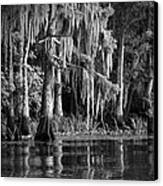 Louisiana Bayou Canvas Print