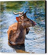 Lovely Time In Water.  Male Deer In The Pampelmousse Botanical Garden. Mauritius Canvas Print by Jenny Rainbow