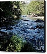 Loving She - Nature  Canvas Print by Tim Rice