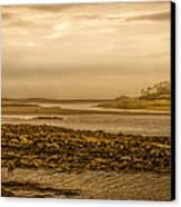 Low Tide Cape Porpoise Maine Canvas Print