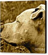 Loyalty And Strength Canvas Print by Q's House of Art ArtandFinePhotography
