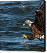 Lunch Time  Canvas Print by Glenn Lawrence