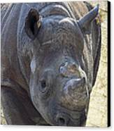 Lurching Rhino Canvas Print by Bill Tiepelman