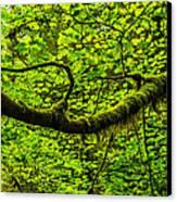Lush Canvas Print by Chad Dutson