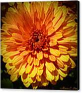 M Bright Orange Flowers Collection No. Bof8 Canvas Print by Monica C Stovall