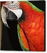 Macaw Profile Canvas Print by John Telfer