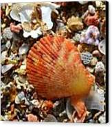Macro Shell On Sand Canvas Print by Riad Belhimer