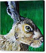 Mad As A March Hare Canvas Print by Stacey Clarke