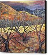 Madera Canyon 2 Canvas Print by Caroline Owen-Doar