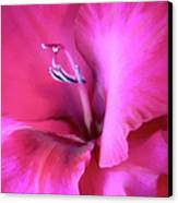 Magenta Splendor Gladiola Flower Canvas Print