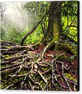 Magical Light On The Appalachian Trail Canvas Print by Debra and Dave Vanderlaan