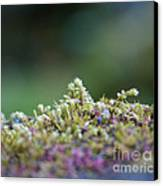 Magical Moss Canvas Print by Sarah Crites
