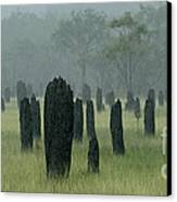 Magnetic Termite Mounds Canvas Print by Bob Christopher