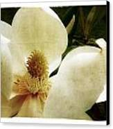 Magnolia I Canvas Print by Tanya Jacobson-Smith