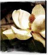 Magnolia IIi Canvas Print by Tanya Jacobson-Smith