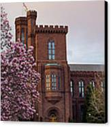 Magnolias Near The Castle Canvas Print by Andrew Pacheco