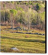 Maine Blueberry Field In Spring Canvas Print by Keith Webber Jr