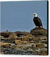 Majestic Bald Eagle Canvas Print by Rhonda Humphreys