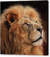 Majestic Lion Canvas Print by David Stribbling