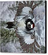Male Acorn Woodpecker - Phone Case Design Canvas Print by Gregory Scott