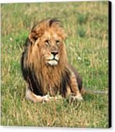 Male Lion On The Masai Mara Canvas Print by Aidan Moran