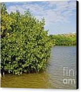 Mangrove Fores Canvas Print by Carol Ailles